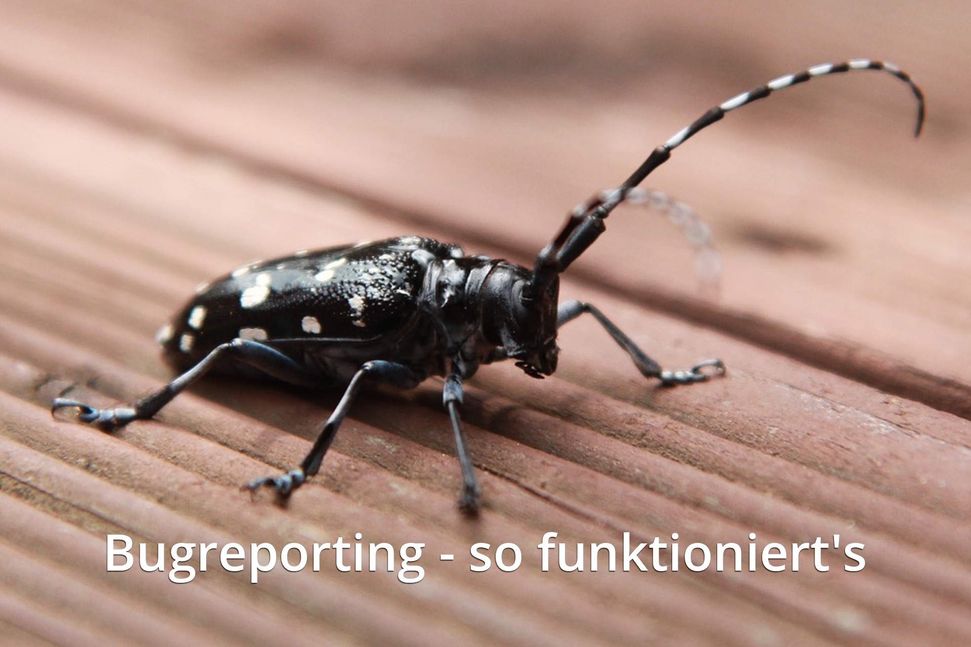 bugreporting